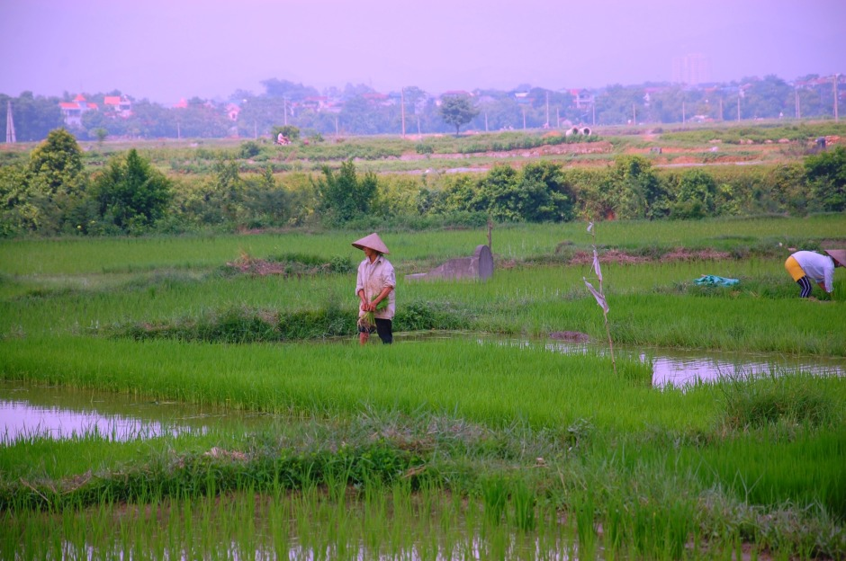 53_ricefields