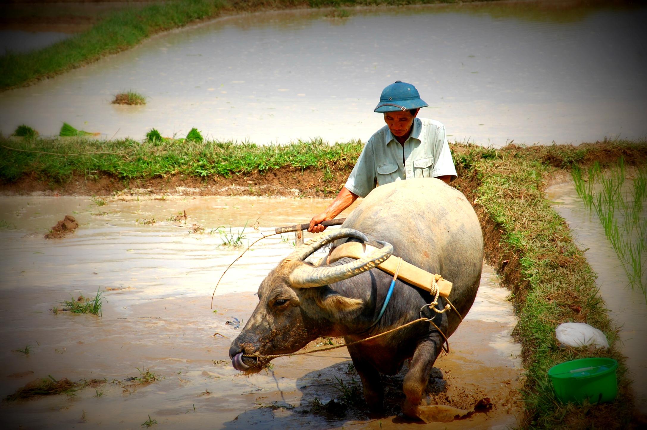 Vietnam: The Red River Delta